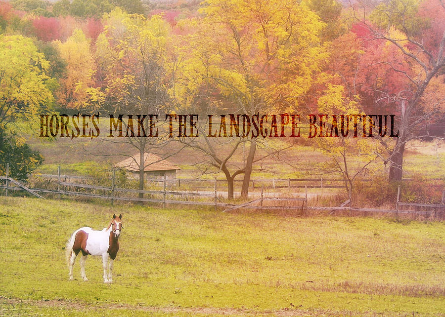 Horse Photograph - Freedom Farms Quote by JAMART Photography