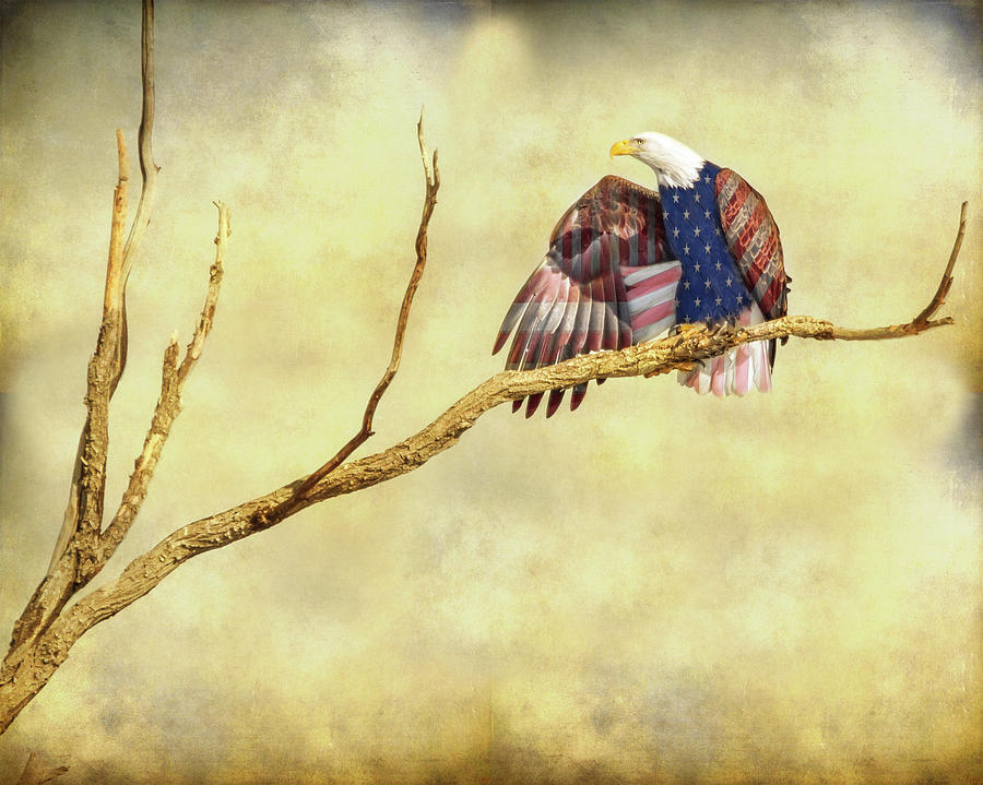America Photograph - Freedom by James BO Insogna