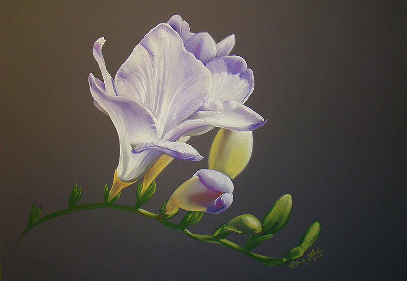 Freesia Pastel - Freesia 1 by Brandi York