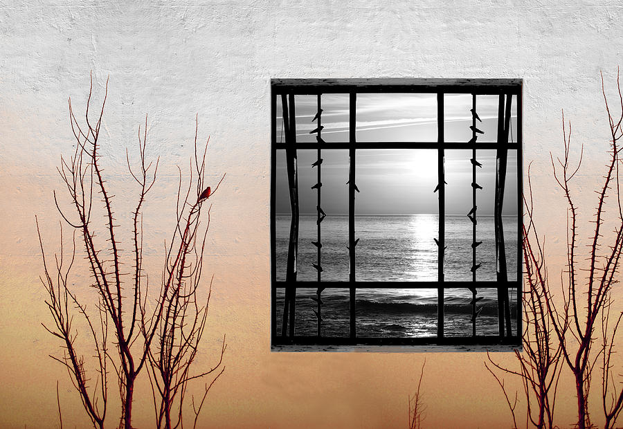Digital Photograph - Freeze by Munir Alawi