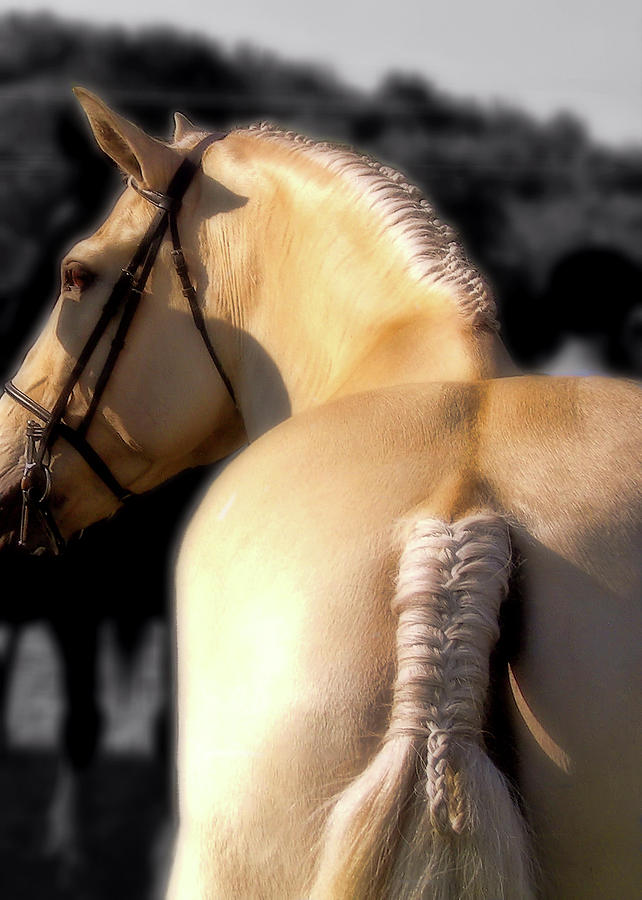 Horse Photograph - French Braid by JAMART Photography