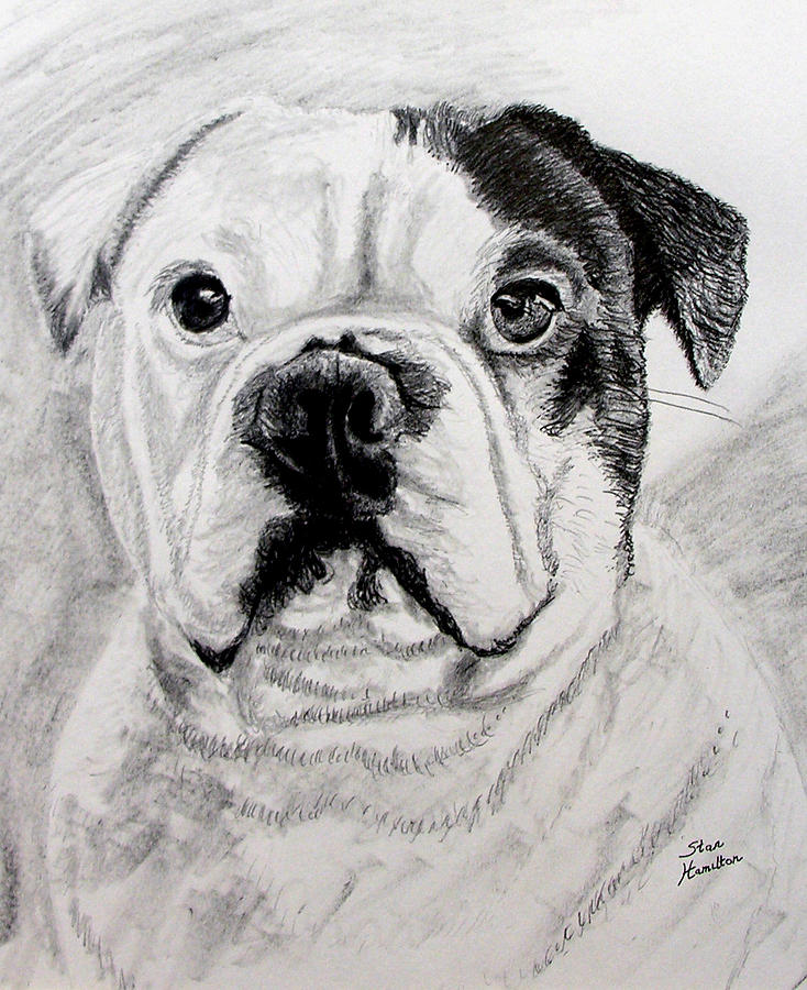 French Drawing - French Bull Dog by Stan Hamilton