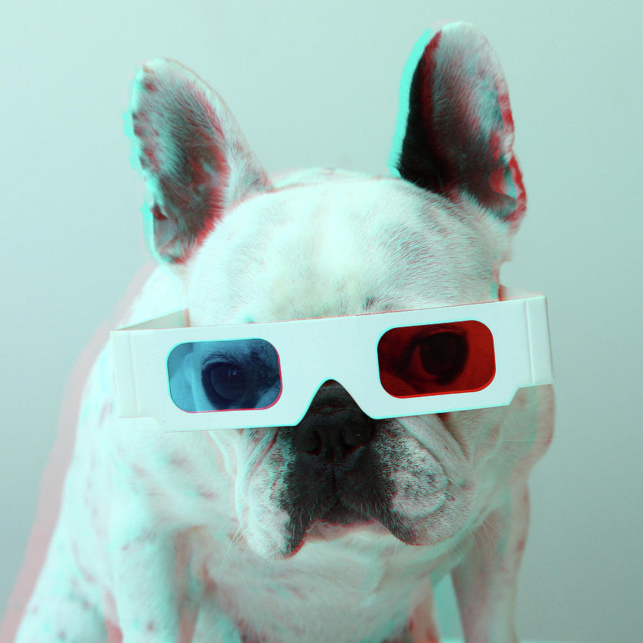 Square Photograph - French Bulldog With 3d Glasses by Retales Botijero