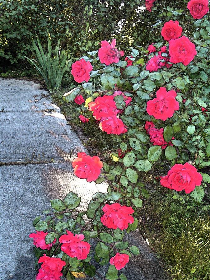 Roses Photograph - Fresco Roses by Karen Fowler