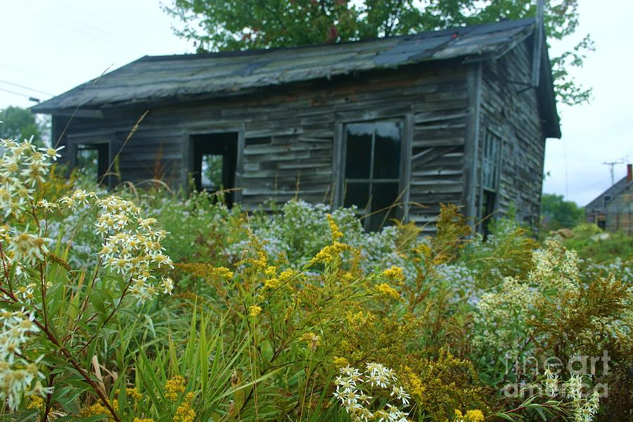 Landscape Photograph - Fresh And Old by Dennis Curry