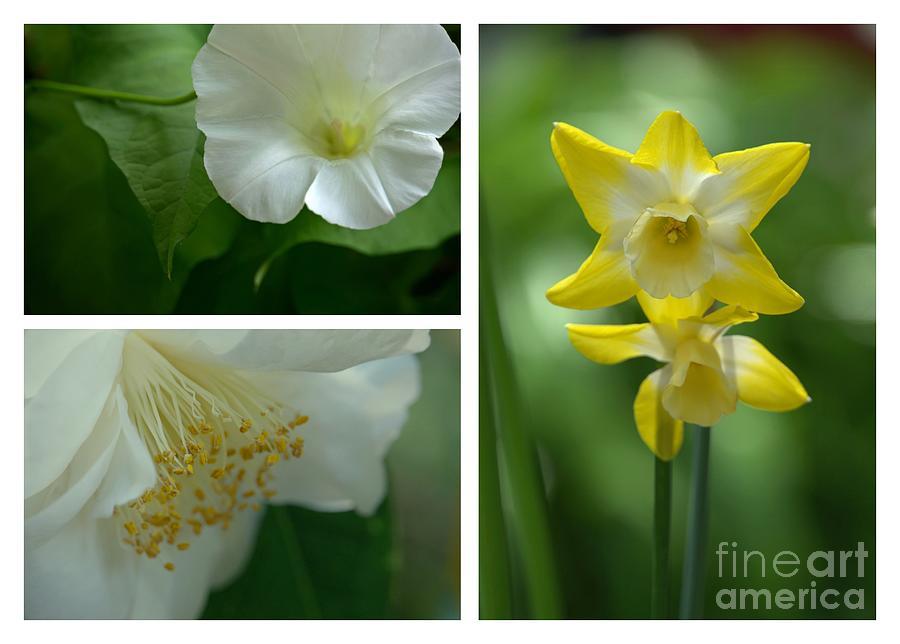 Fresh Flowers Triptych by Patricia Strand