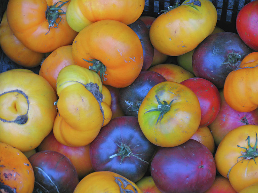 Heirloom Tomatoes Photograph - Fresh Heirloom Tomatoes by Ave Guevara