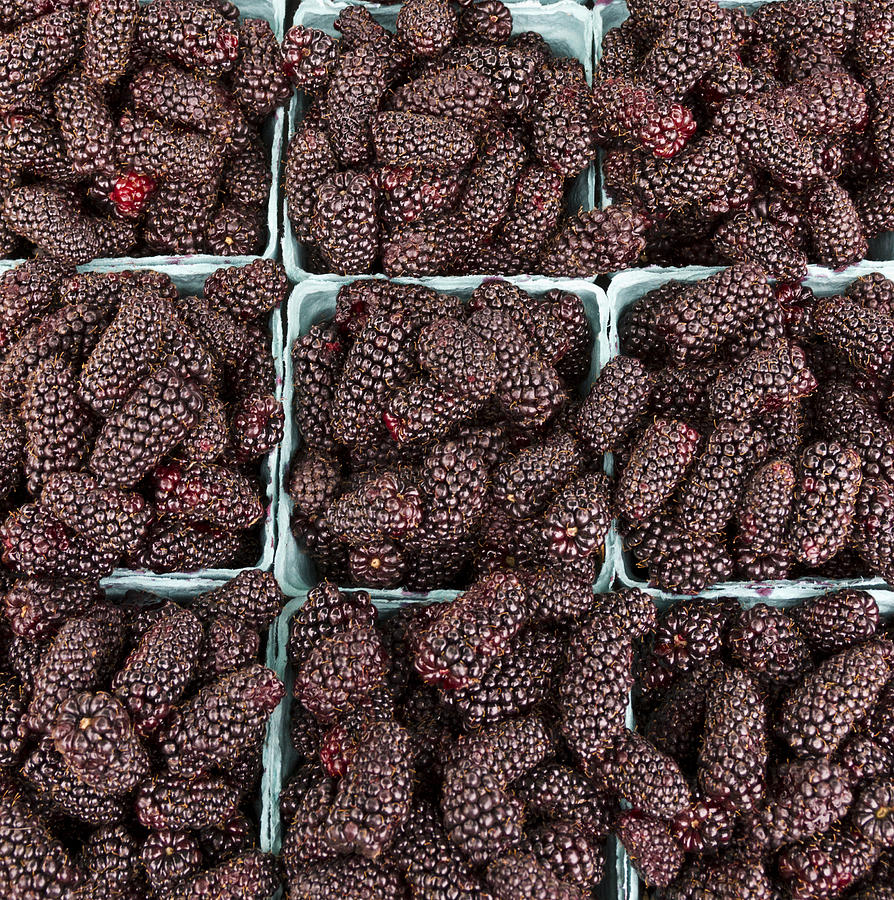 Agriculture Photograph - Fresh Marionberries by John Trax