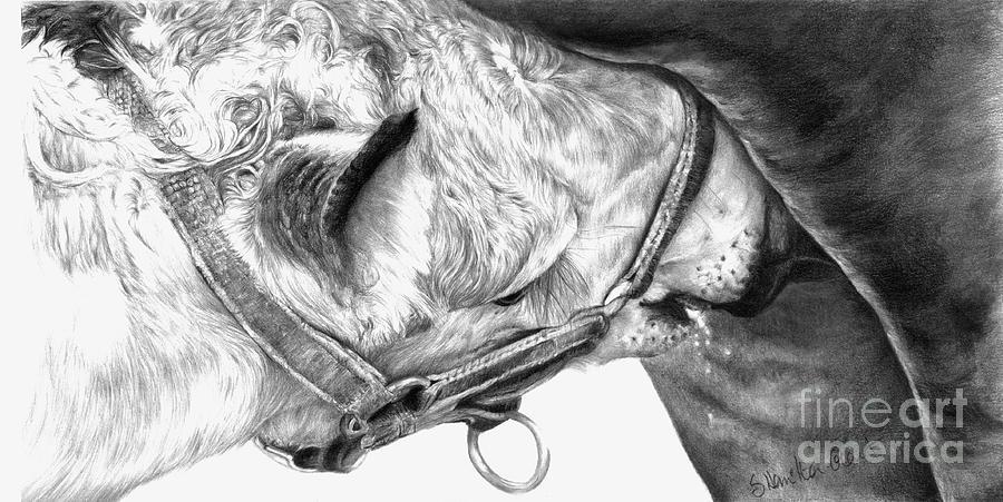 Equine Drawings Drawing - Fresh Milk by Sheona Hamilton-Grant