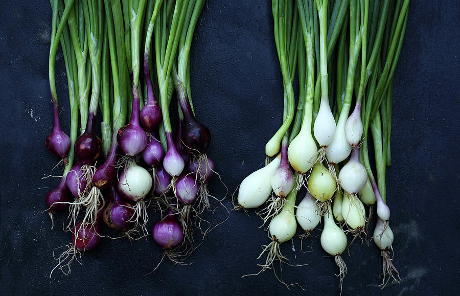 Fresh Onion Photograph