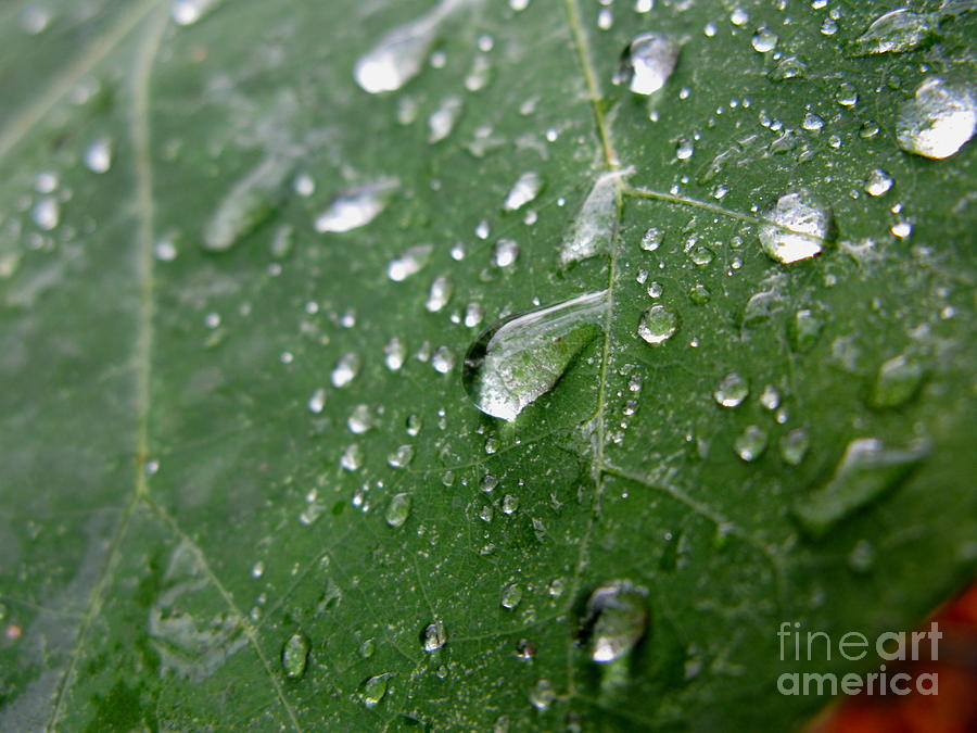 Leaf Photograph - Fresh by PJ  Cloud