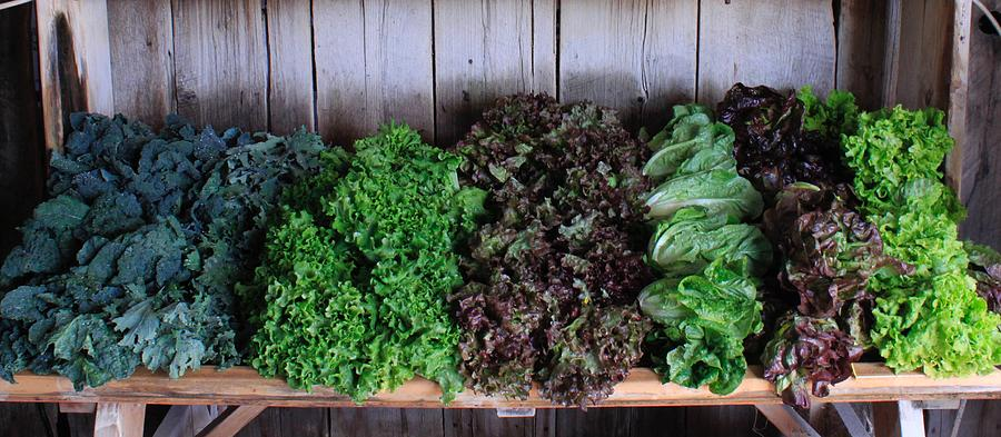 Organic Crops Photograph - Fresh Produce Stand by Rose Webber Hawke