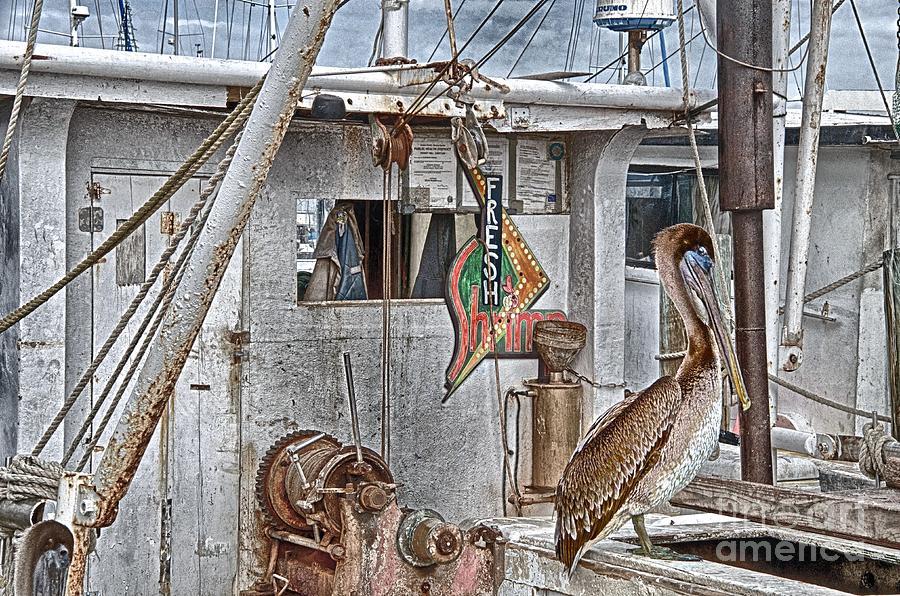 Fresh Shrimp by Ken Williams