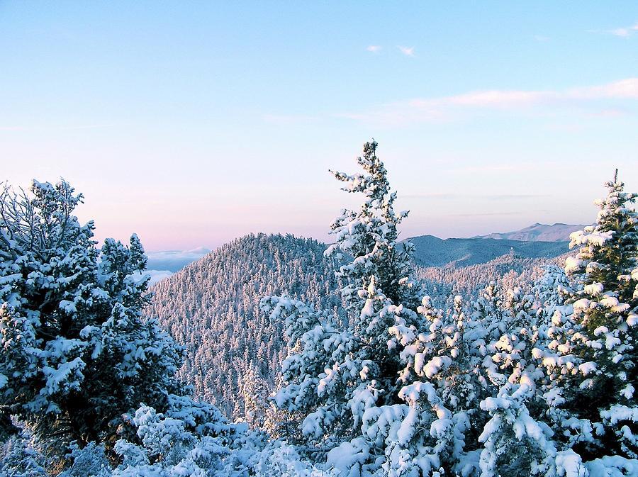 Fresh Snow on Trees by WhiteoakorganicsLLC Gallery