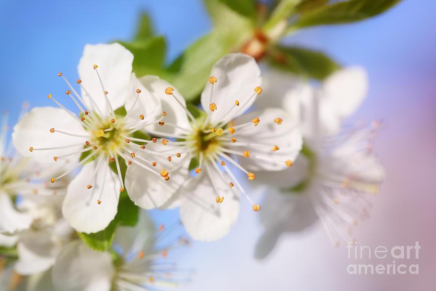 Spring Freshness... Photograph
