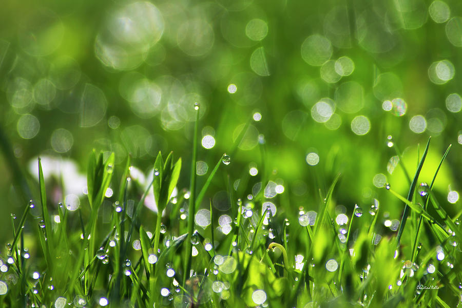 Fresh Photograph - Fresh Spring Morning Dew by Christina Rollo