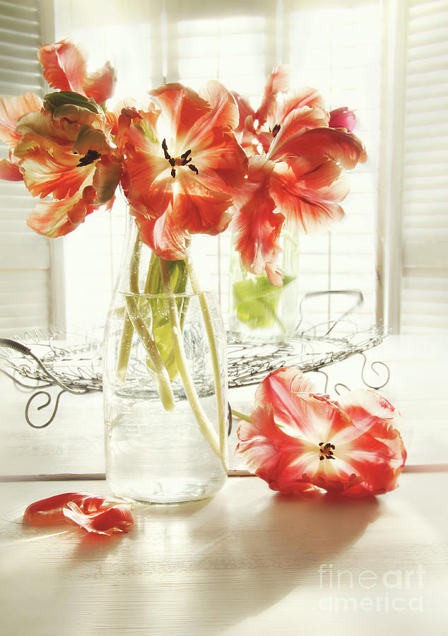 Background Photograph - Fresh Spring Tulips In Old Milk Bottle  by Sandra Cunningham