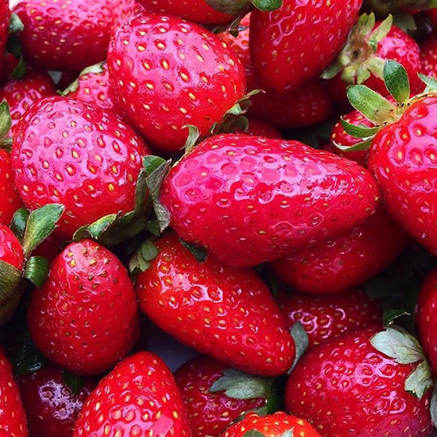 Instagram Photograph - Fresh Strawberries - Just Loved The by Paul Dal Sasso