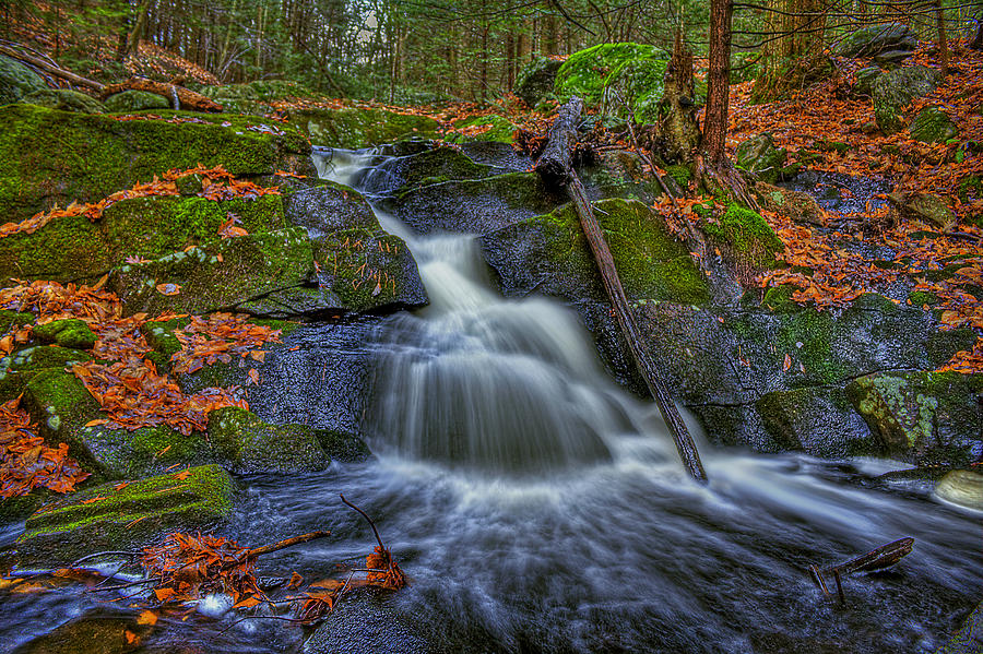 Autumn Photograph - Fresh Water by Evelina Kremsdorf