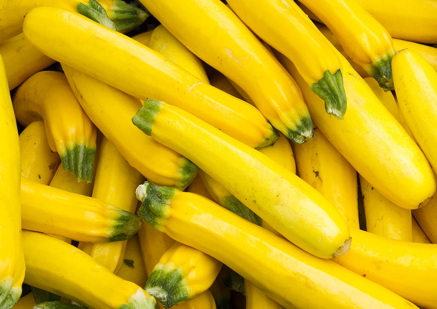 Agriculture Photograph - Fresh Yellow Squash  by John Trax