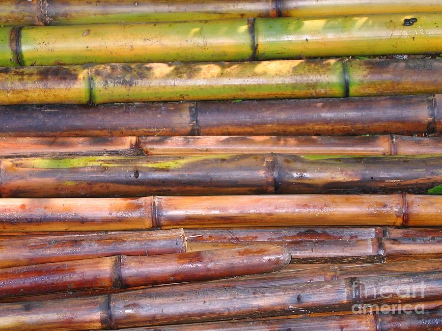 Freshly cut bamboo poles photograph by yali shi