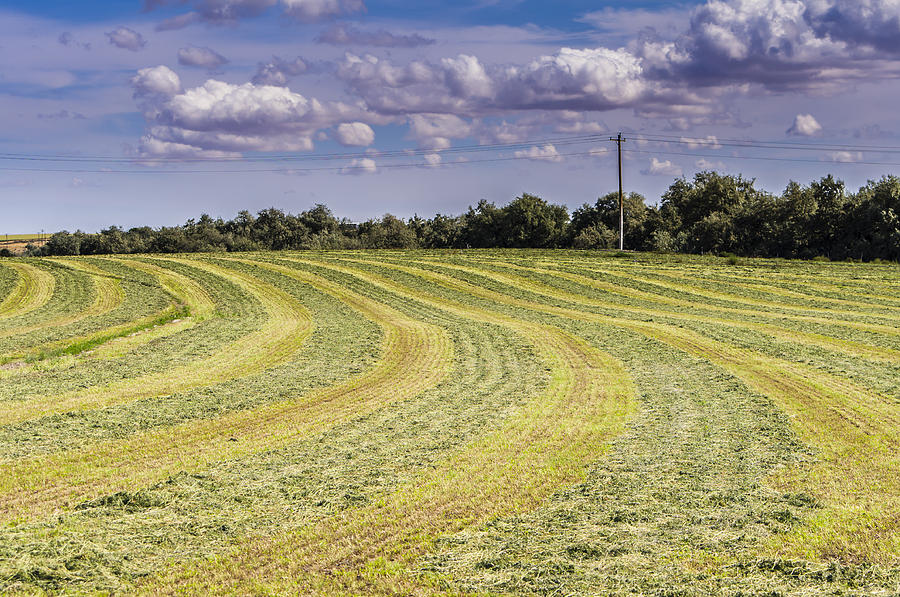 Summer Photograph - Freshly Mown Hay  by John Trax