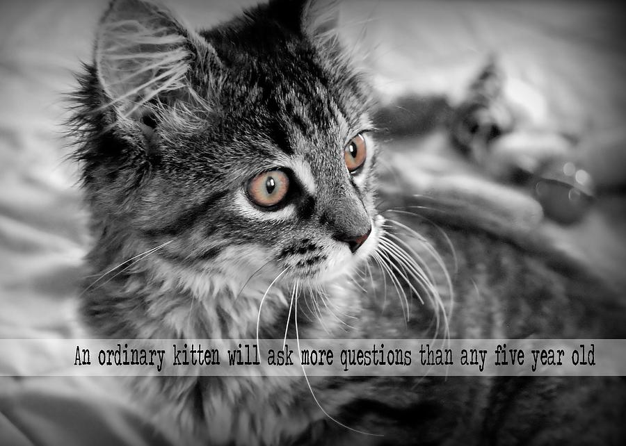 Cat Photograph - Freya Quote by JAMART Photography