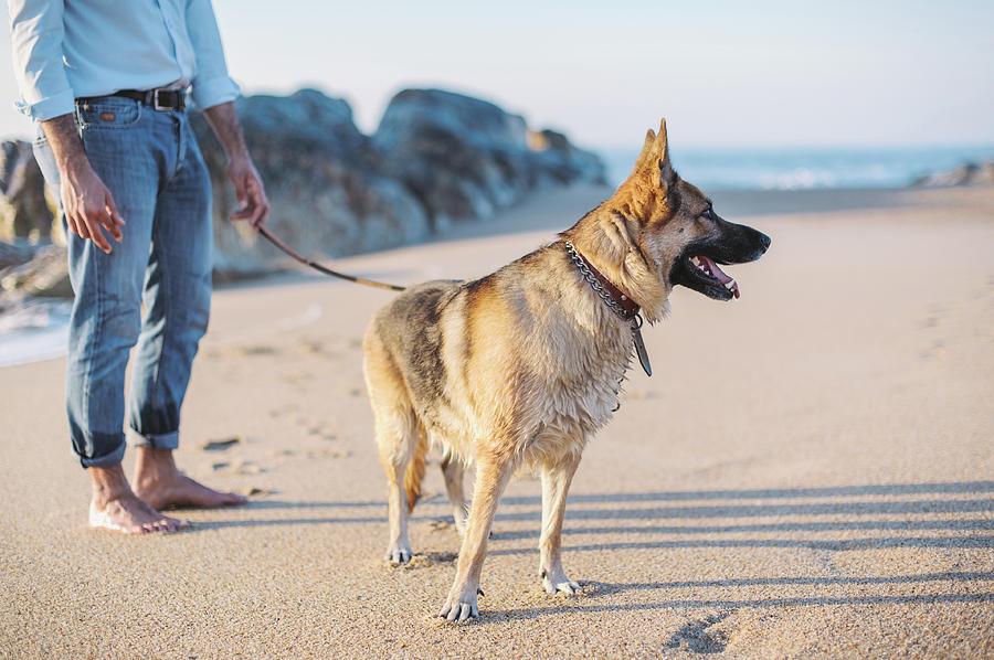 Animal Photograph - German Shepherd With Man On The Beach by Maksym Kaharlytskyi