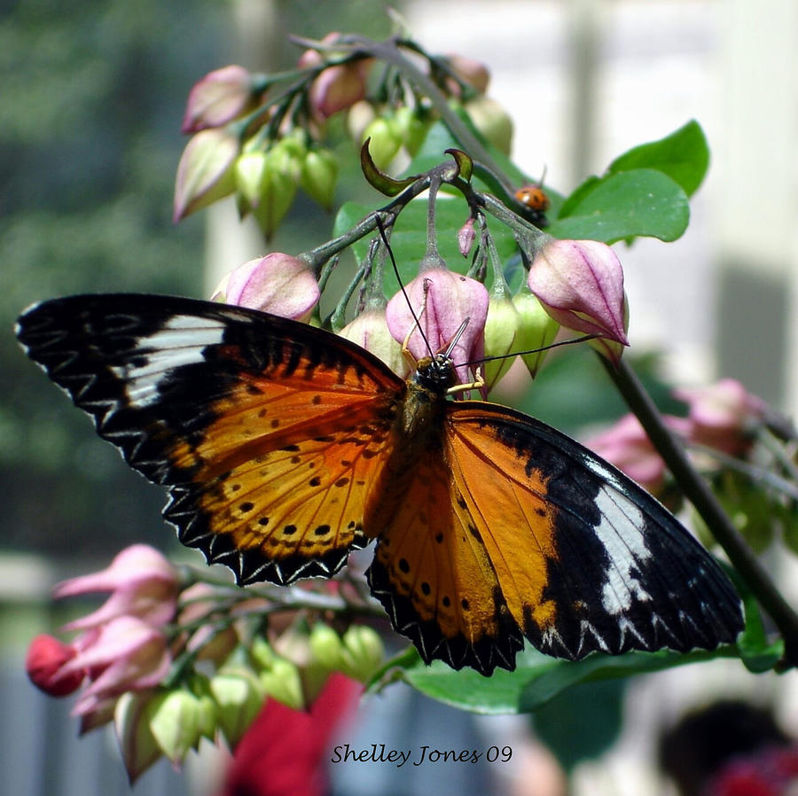 Butterfly Photograph - Friends come in small packages by Shelley Jones