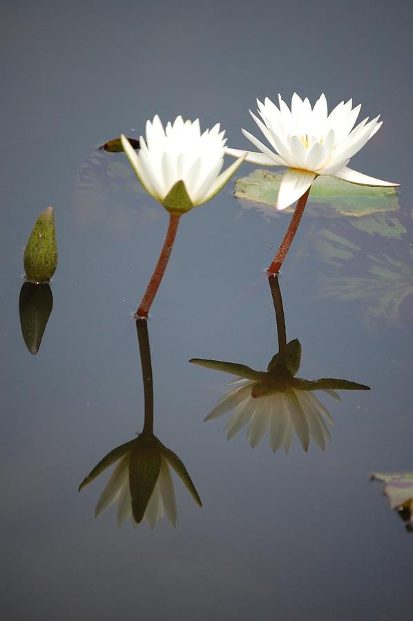 Flowers Photograph - Friends by Danielle Marco