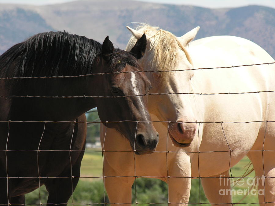 Horse Photograph - Friends by Diane Greco-Lesser
