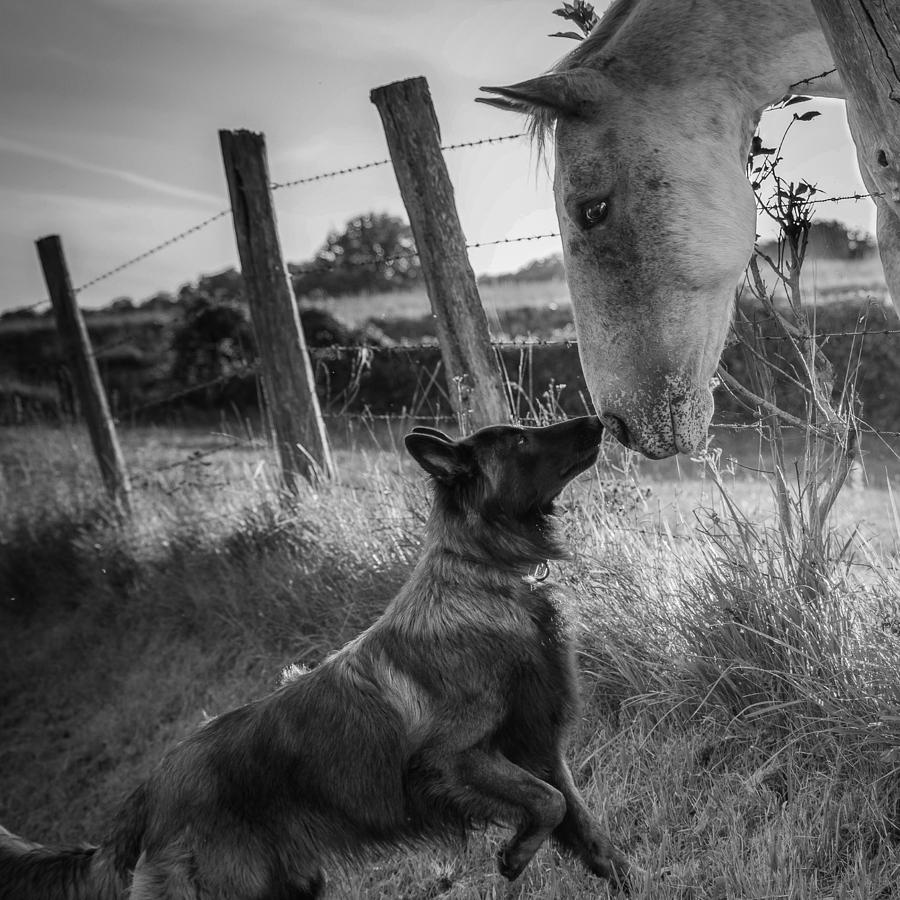Dog Photograph - Friends Kiss ;-) by Christophe
