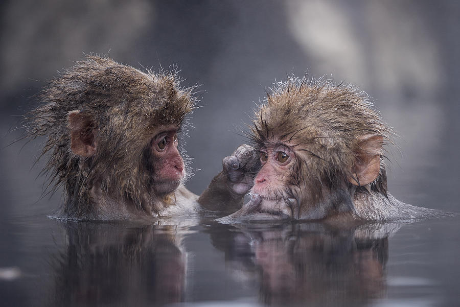Nature Photograph - Friends by Takeshi Marumoto