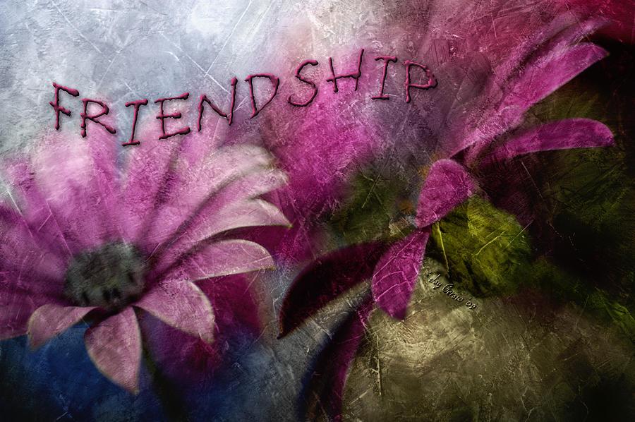 African Daisy Photograph - Friendship by Joy Gerow