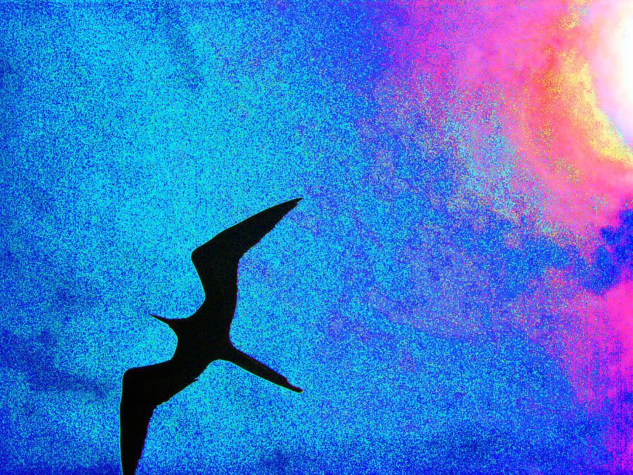 Frigate Photograph - Frigate Bird by Ladonna Idell