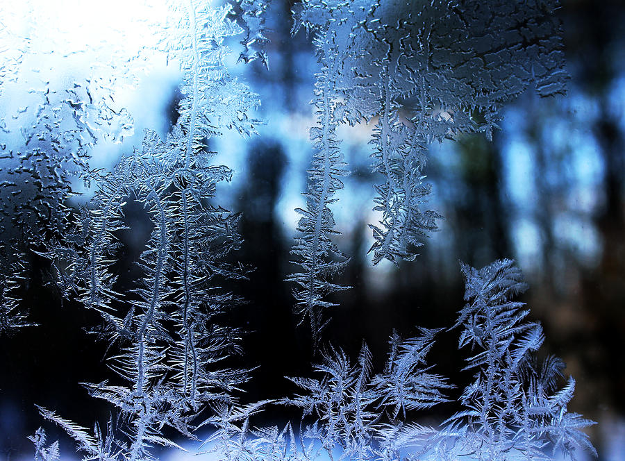 Ice Photograph - Frigid Blue Morning by Liz Allyn
