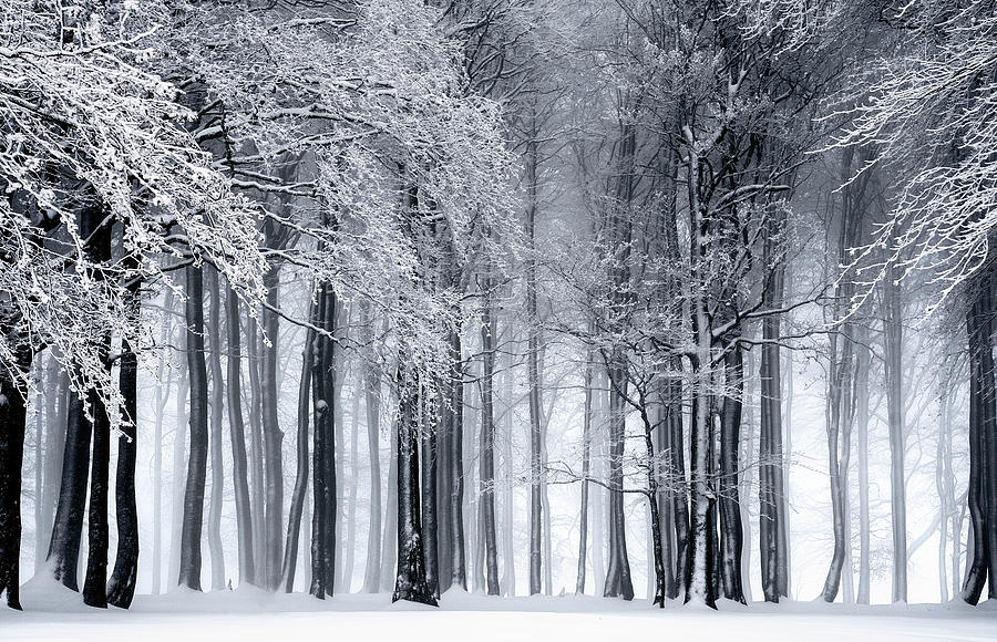 Winter Photograph - Frigid Forest by Daniel Hagerman