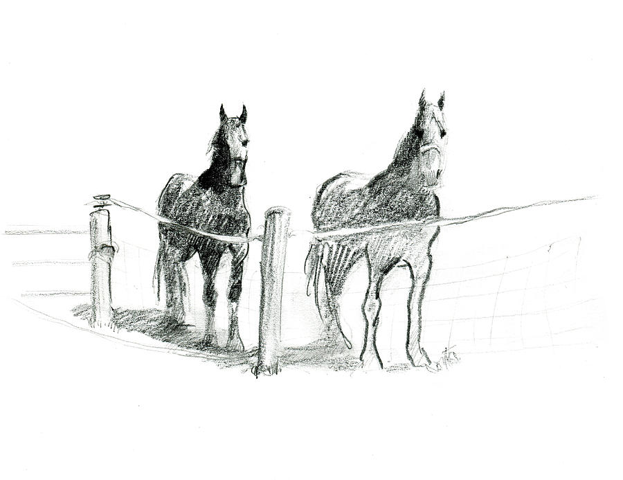 Friesian Horses by Abby McBride
