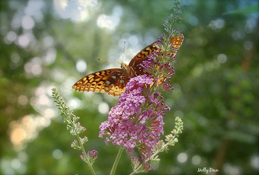 Butterfly Photograph - Fritillary by Molly Dean