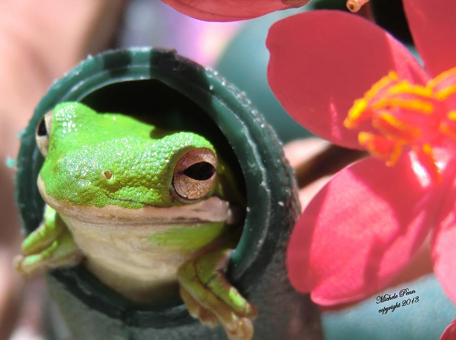 Red Photograph - Frog at Selby by Michele Penn
