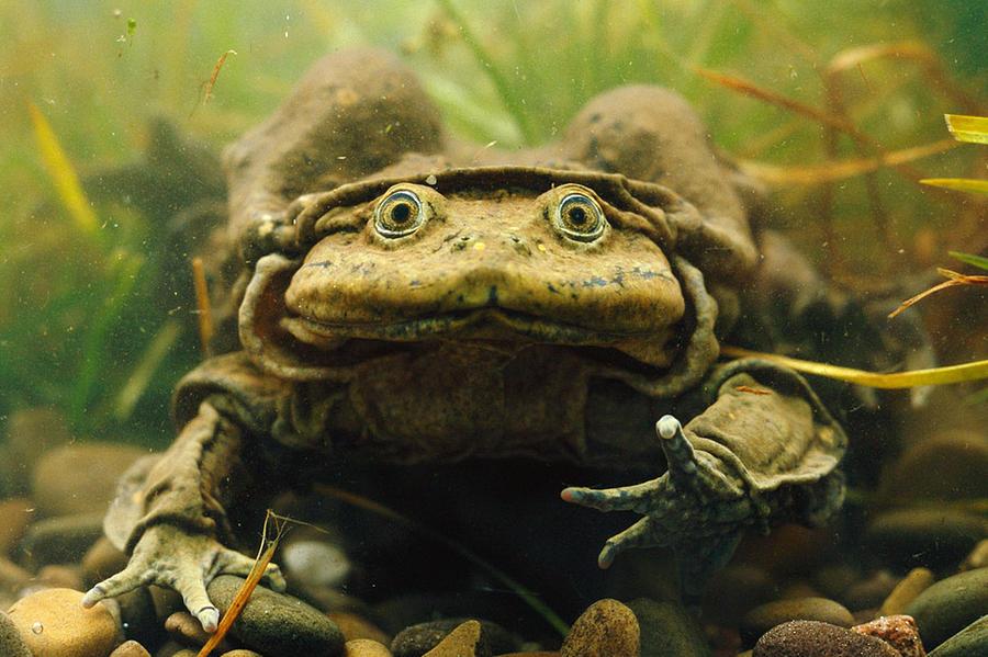 Frog Digital Art - Frog by Dorothy Binder