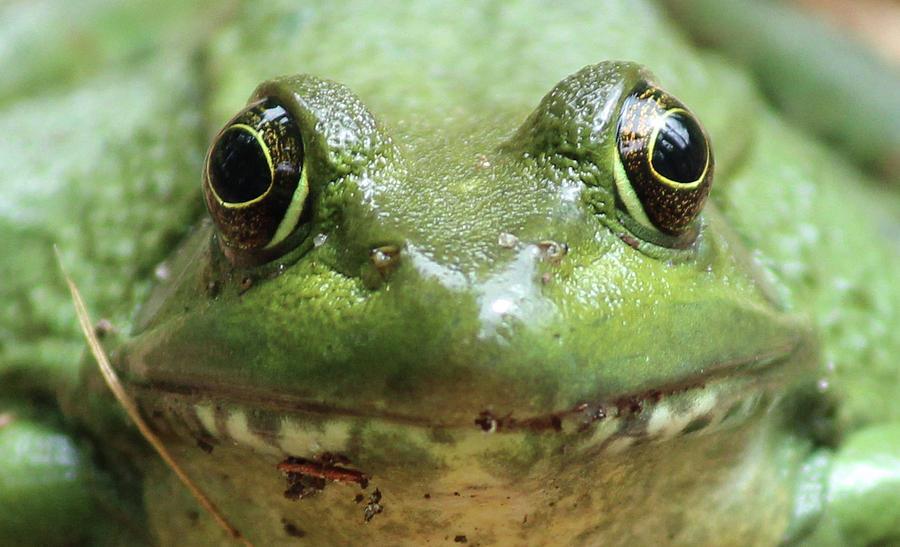 [Image: frog-face-cynthia-lynn.jpg]