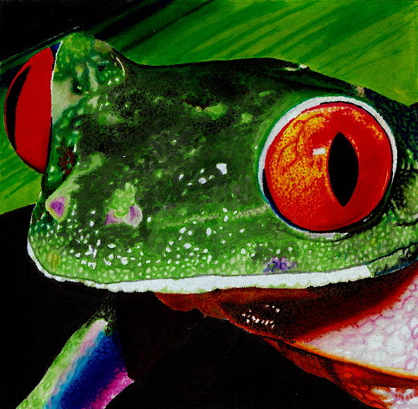 Frog Drawing by Monica Delgado
