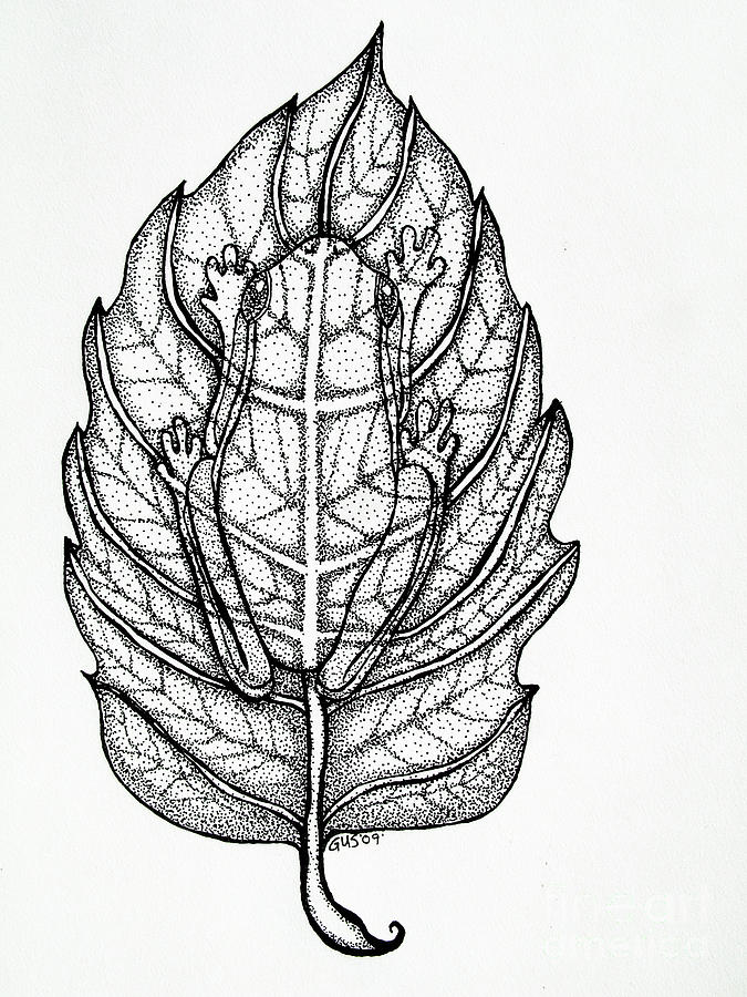 Frog On A Leaf Drawing