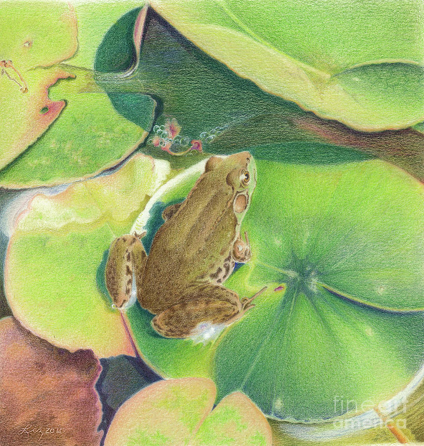 Froggie by Elizabeth Dobbs