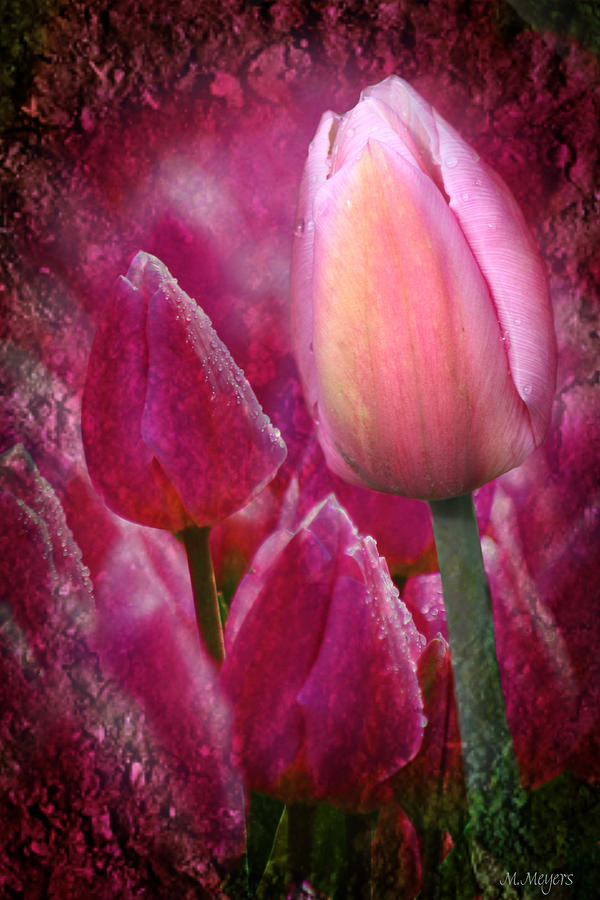 Flower Mixed Media - From The Earth by Melisa Meyers