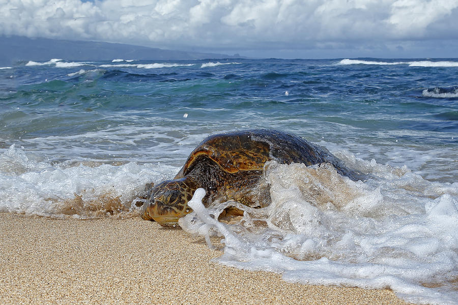 Nature Photograph - From The Sea by Peter Stahl