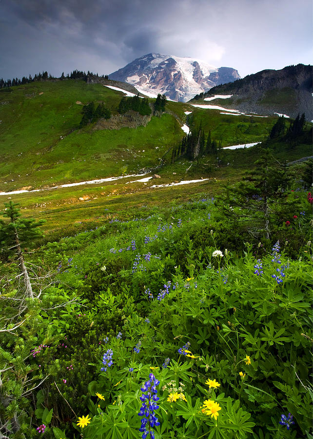 Rainier Photograph - From The Top by Mike  Dawson