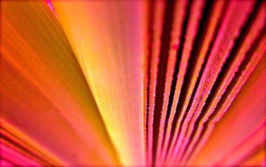Palm Fron Photograph - Fron Fan Unfolding by Gwyn Newcombe