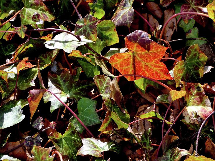 Panasonic Photograph - Front Gardens by Nik Watt